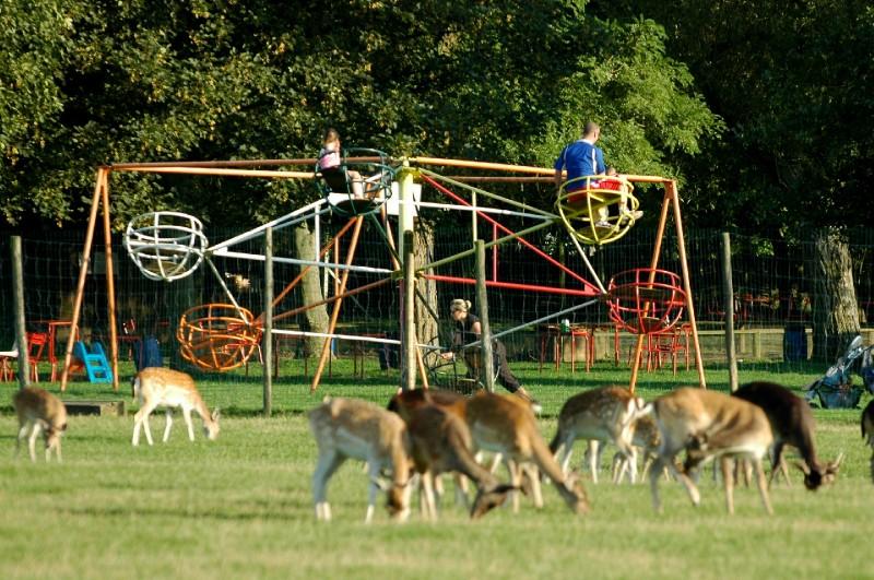 Parc animalier d 39 estourmel ferm actuellement for 78 parc animalier